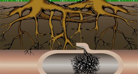 how tree root can affect your home plumbing